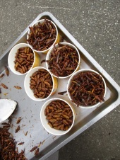 Insect salad toppings